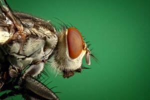 Pest Away Mini, effetti collaterali, controindicazioni
