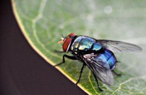 Pest Away Mini, forum, commenti, opinioni, recensioni