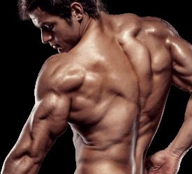 X-Muscle, composizione, funziona, come si usa, ingredienti
